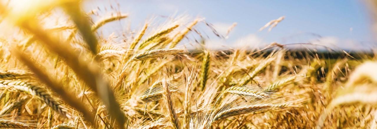Solutions VolvoTrucks pour le transport dans le secteur agricole